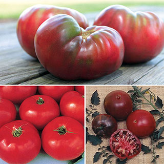 Heirloom Tomato Favorites Assortment (pack of 3)
