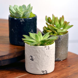 Succulent Gift in Distressed DolomiteImage