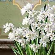 Good Tidings Paperwhites Bulb Garden