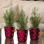 Lets Be Jolly Cypress Trio