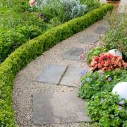 InstantHedge 'Green Mountain' Boxwood
