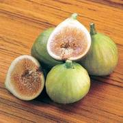Ficus Italian Honey Fig