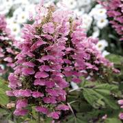 Hydrangea Care Guide Planting Pruning Tips Wayside Gardens