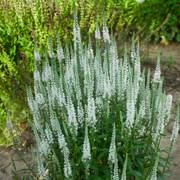 'White Wands' Veronica Magic Show ®