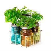 Cocktail Herbs Garden Jar