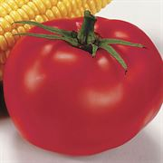 Better Boy Hybrid Tomato (pack of 3)