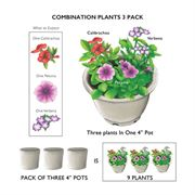 Calibrachoa MiniFamous® Caribbean Cocktail Combination (pack of 3)