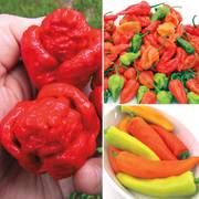 Pepper Super Hot Assortment