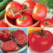 Top Tomato  Assortment (pack of 3)