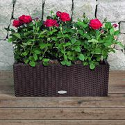 Lechuza Mocha All in One Balconera Cottage Self Watering Planter