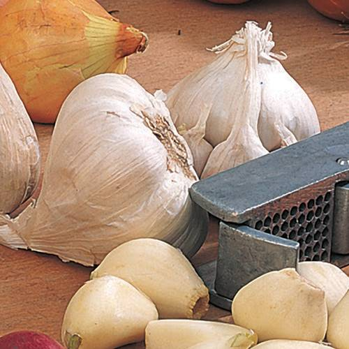 Garlic Euro White