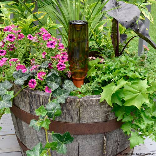 Recycle a Wine Bottle Watering  Stake