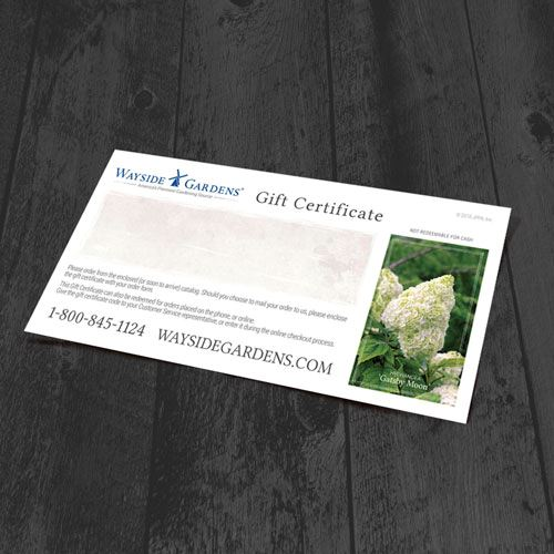 Shop All Gift Certificates