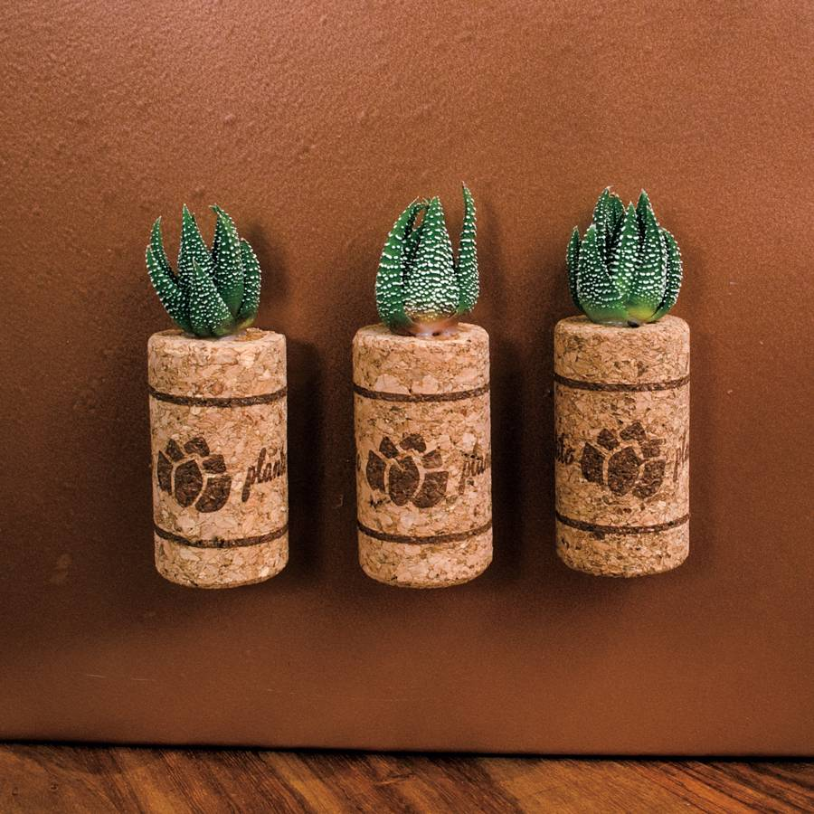 Succulent Plant in Magnetic Wine Cork - Set of 3 Image