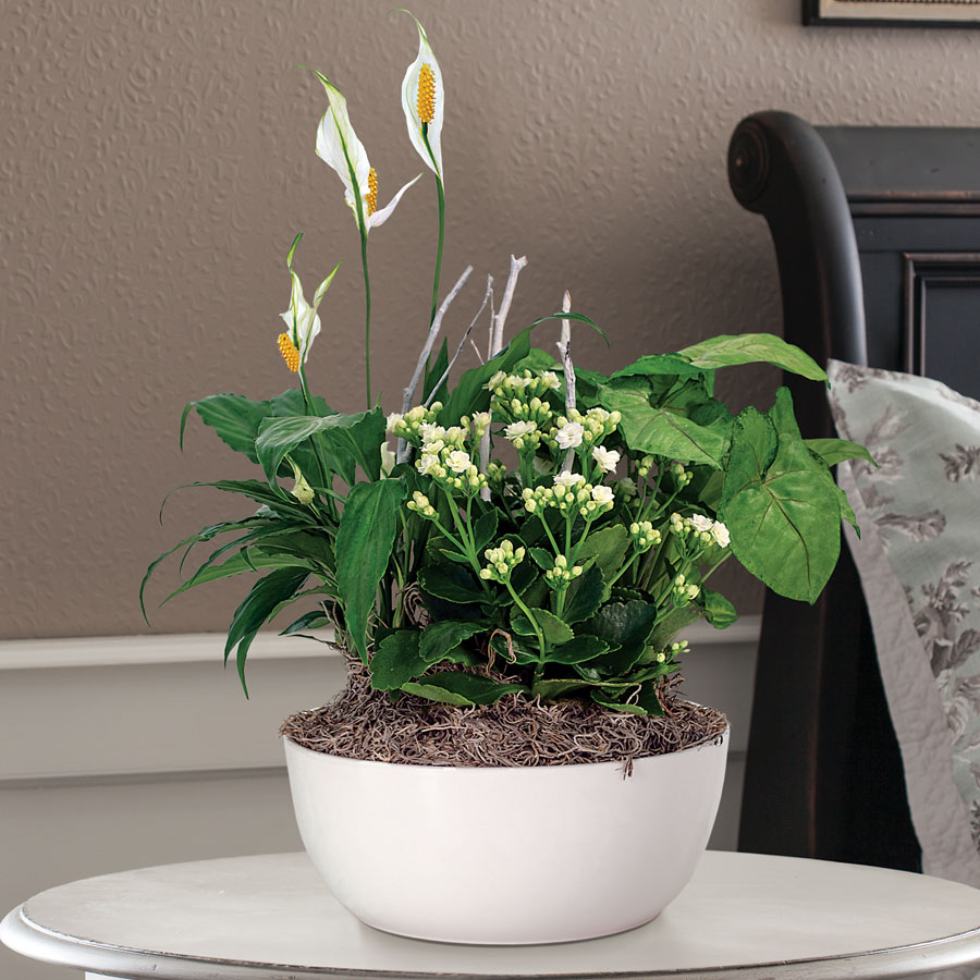 Peace Lily Kalanchoe Arrowhead Plant Mix In White Container