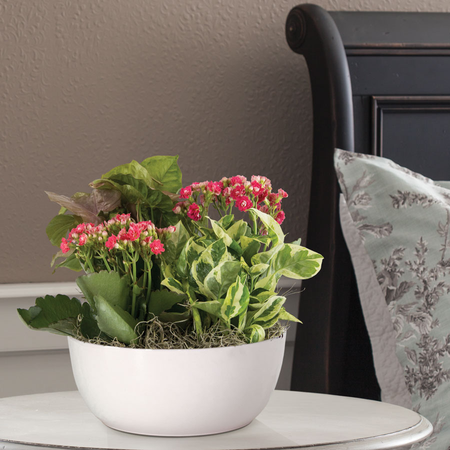 kalanchoe and nephytis mix at wayside gardens. Black Bedroom Furniture Sets. Home Design Ideas